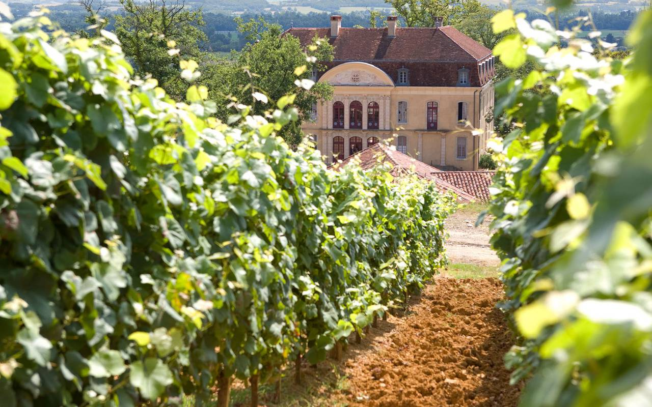 Vineyards, Lourdes travel, Hôtel Continental Lourdes